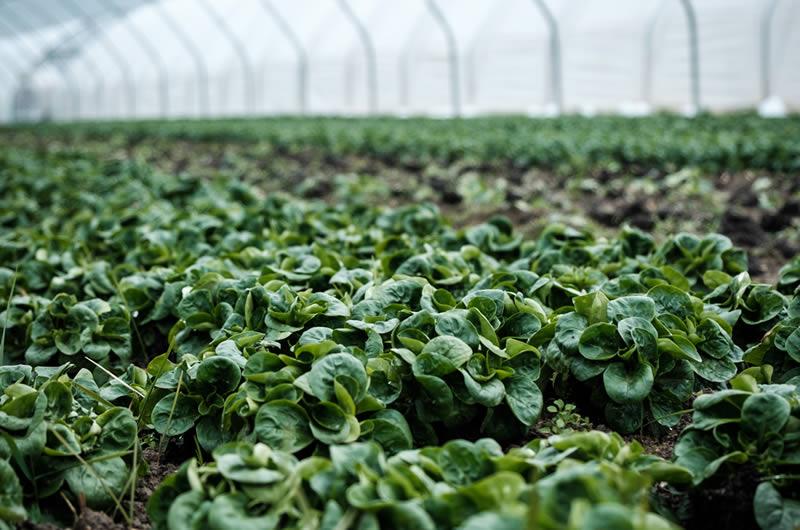 Lebensmittelproduktion