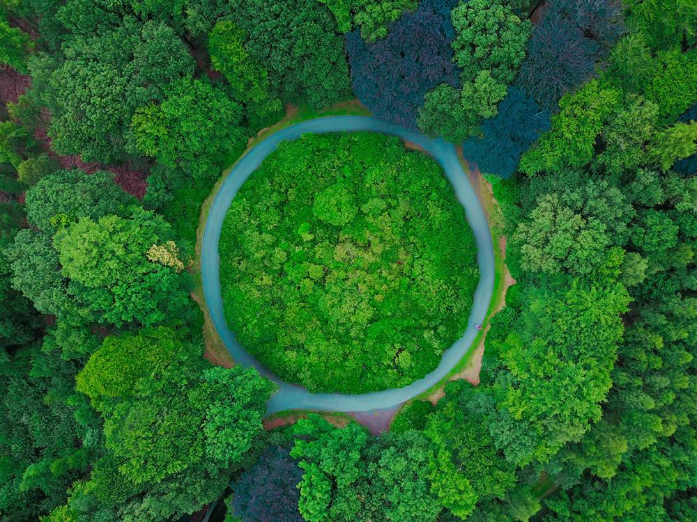 Öko-Pinzip Luftbild Wald